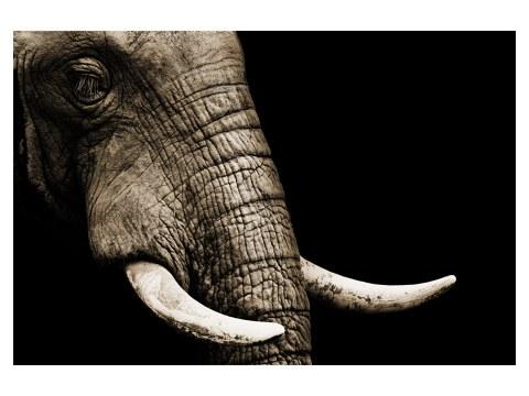 olifanten foto´s