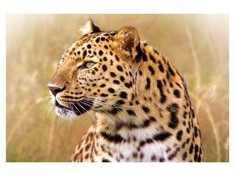 Foto luipaard